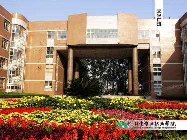 Летние курсы Пекинского Профессионального Института Nong Ye, Пекин